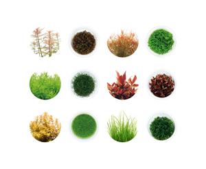 news-piante