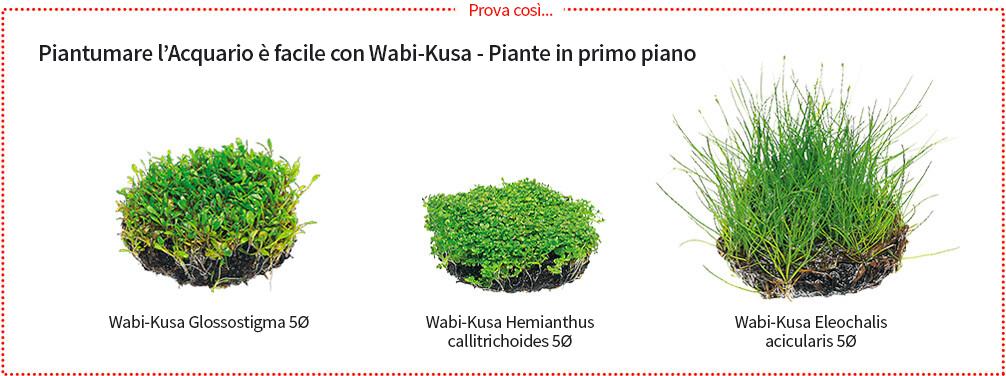 Guida all 39 acquario naturale ada italy for Acquario ada prezzi