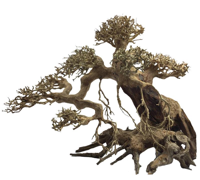Bonsai wood shop ada italy for Bonsai italia
