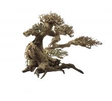 Bonsai Wood