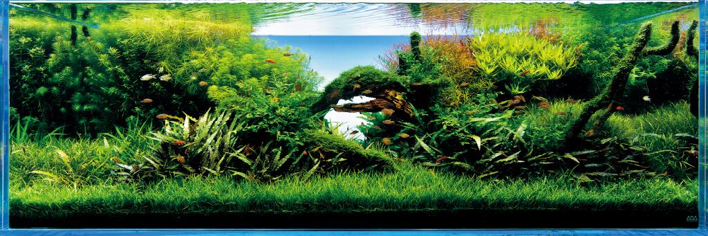 Takashi amano l 39 inventore dell 39 acquario naturale ada italy for Acquario ada prezzi